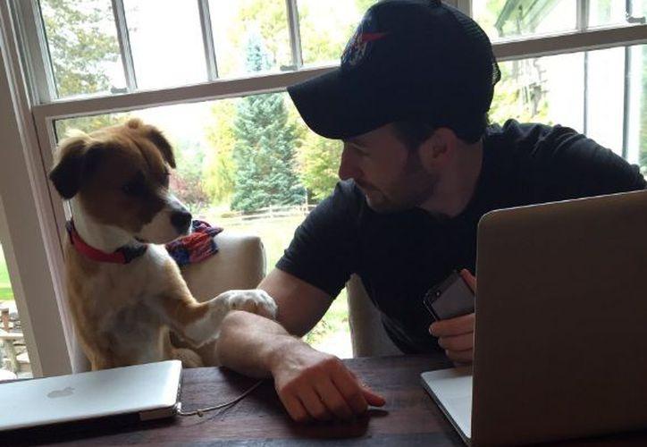 El intérprete de Capitán América siempre se ha distinguido por tener un afecto y cariño especial por los animales. (Twitter)