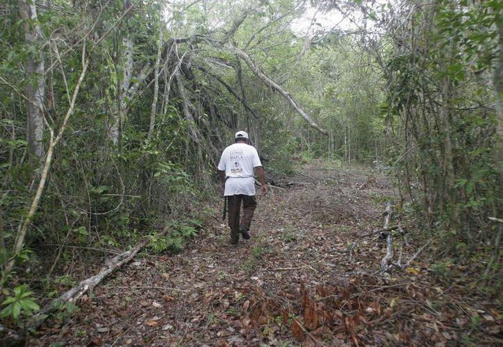 El programa de reforestación de Chiczá  prevé tener luz verde la próxima semana. (Harold Alcocer/SIPSE)