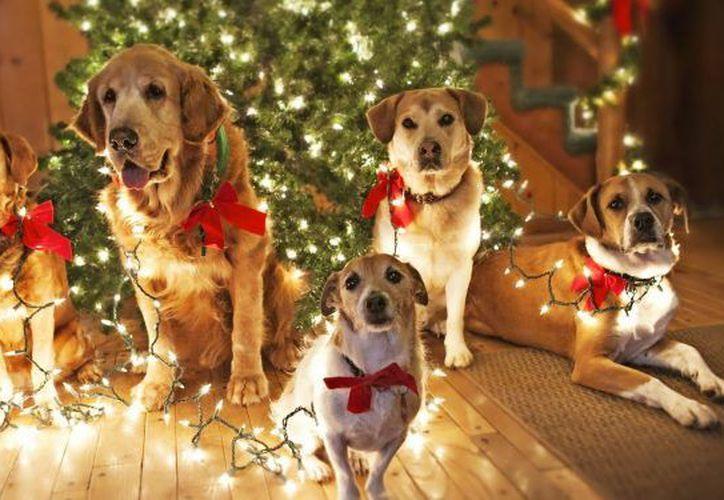 La posada se llevará a cabo en el hotel para mascotas Animal House. (Foto: Contexto)