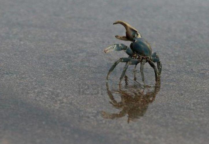 El objetivo de la campaña es ayudar a los crustáceos a cumplir su objetivo sin contratiempos. (Foto de Contexto/es.123rf.com)