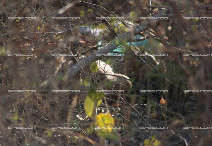 Un hombre fue hallado muerto en un terreno baldío en Mérida. Se desconocen las causas del fallecimiento, pero las autoridades creen que el hombre murió de un paro cardiaco cuando entró al monte a hacer una necesidad fisiológica. (SIPSE)