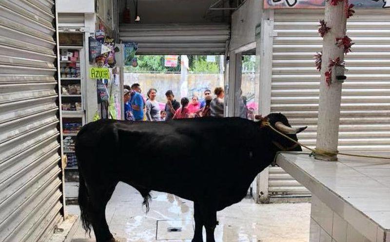 Se mete toro en mercado público de Tláhuac