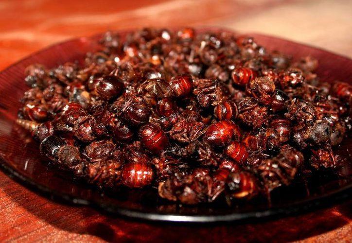 El nucú suele comerse como si fuesen cacahuates: asados con sal y limón. (todochiapas.mx)