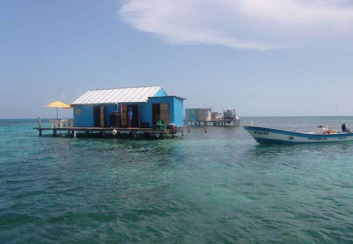 Aproximadamente el 75% de las extinciones de animales ha ocurrido en islas. (Redacción/SIPSE)