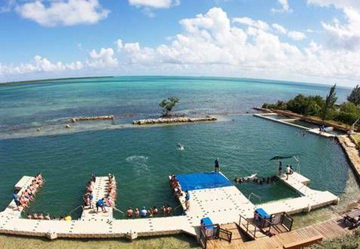 Dolphin Cove Cayman comenzó operaciones en 2008 y ahora forma parte de la empresa quintaanrroense. (Redacción/SIPSE)