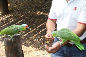 <i>Cocinan buffet de caché</i> para animales del Zoológico Payo Obispo