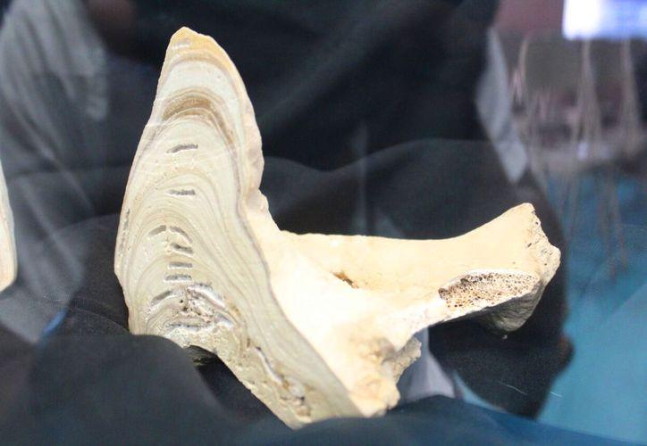 El descubrimiento fue presentado en el Planetario Sayab de Playa del Carmen. (Daniel Pacheco/SIPSE)