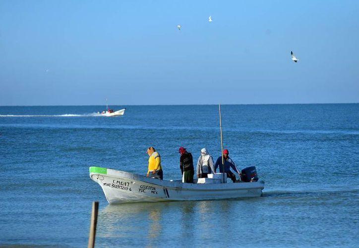 La pesca del mero es de las actividades más importantes en la costa yucateca. (Milenio Novedades)