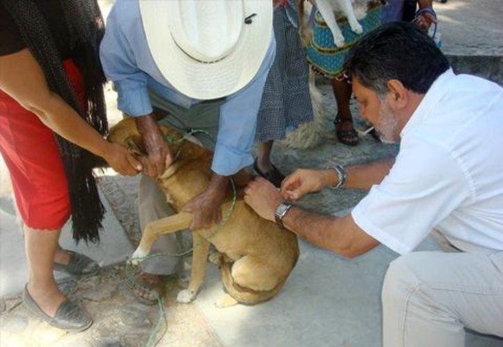 En México  existen alrededor de 28 millones de mascotas. (Notimex/archivo)