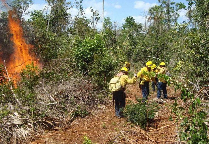 Los incendios afectan una superficie de 104 hectáreas. (Cortesía/SIPSE)