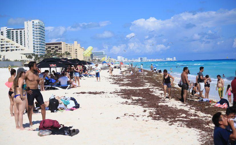 El sargazo en las playas tiene un impacto ambiental y económico, pues ahuyenta el turismo. (Redacción/SIPSE)