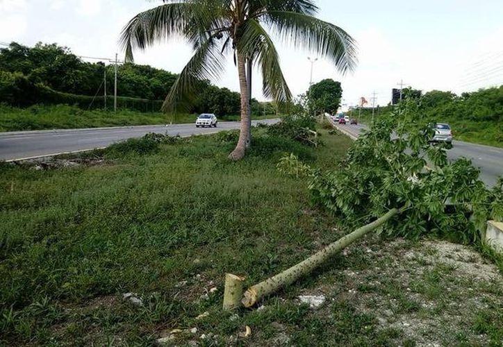 Decenas de árboles fueron talados en el camellón de la carretera, considerada como zona de reforestación. (Redacción)