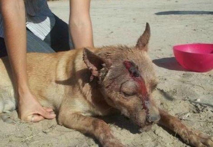 El autor de este acto atroz contra un perro inocente es Ramón Santiago Pineda Villalobos, buscado por todo  Baja California. (Milenio)