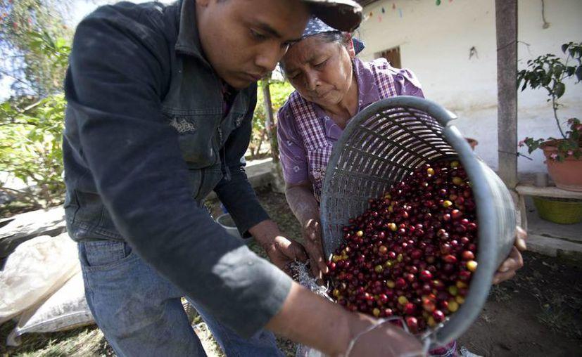 Desde 2005 la Federación Colombiana de Productores de Café se ha esforzado en que se reconozca su producto en el mayor número de países posibles. (EFE)
