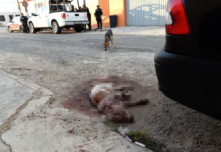 Al parecer, los perros de nombres 'Pirata' y 'Shasa', en un descuido de su dueña, escaparon de su vivienda y atacaron a un perro mestizo de nombre 'Bethoven' que se encontraba en una casa vecina con una niña. Imagen de uno de los animales heridos. (Milenio Novedades)