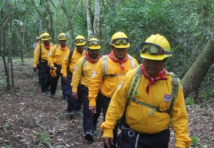 Las brigadas contra incendios forestales se encuentran listas para la temporada. (Edgardo Rodríguez/SIPSE)
