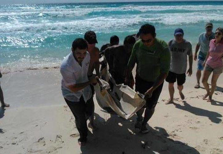 El delfín fue puesto a disposición de especialistas de la Red de Varamientos de Mamíferos Marinos en Isla Mujeres. (Redacción/SIPSE)