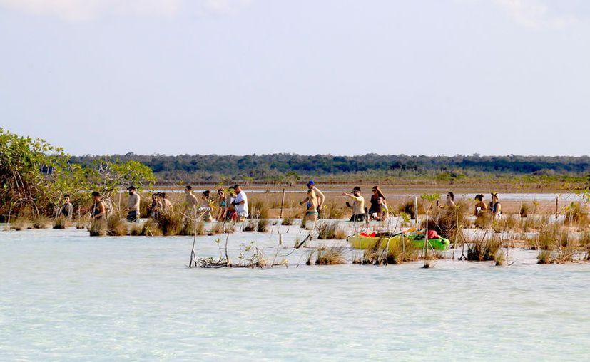 Los visitantes caminan y exploran entre los manglares, lo que remueve la arena y el sedimento con el que se alimentan los organismos. (Foto: Javier Ortiz / SIPSE)