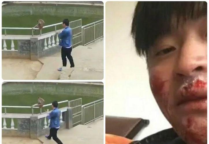 Otros monos se sumaron al ataque contra el turista, que mostró las lesiones en su rostro. (Foto: Internet)