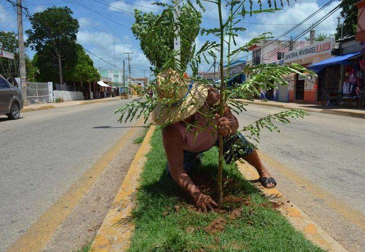 Personas con poca o nula educación destruyen las plantas. (Tony Blanco/ SIPSE)