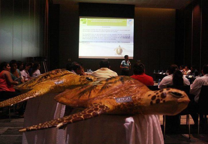 Ayer se realizó la segunda sesión de trabajo del Comité de Protección y Conservación de Tortugas Marinas de Solidaridad. (Octavio Martínez/SIPSE)