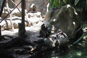 Cumplen observaciones para evitar cierre de zoológico