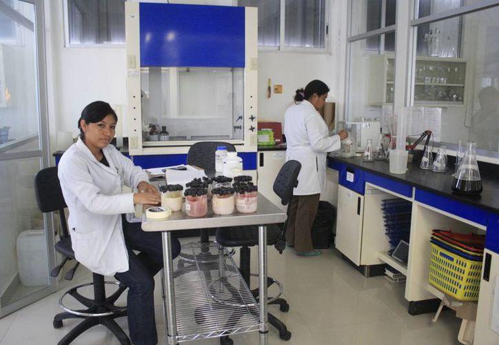 El laboratorio destacó por el diagnóstico de enfermedades como cólera, enterobacterias, tuberculosis, VIH/SIDA, sarampión y rubeola. (Harold Alcocer/SIPSE)