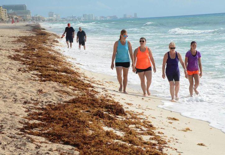 El sargazo tuvo un arribo atípico en las costas del Caribe mexicano durante el periodo vacacional de verano del año pasado. (Luis Soto/SIPSE)