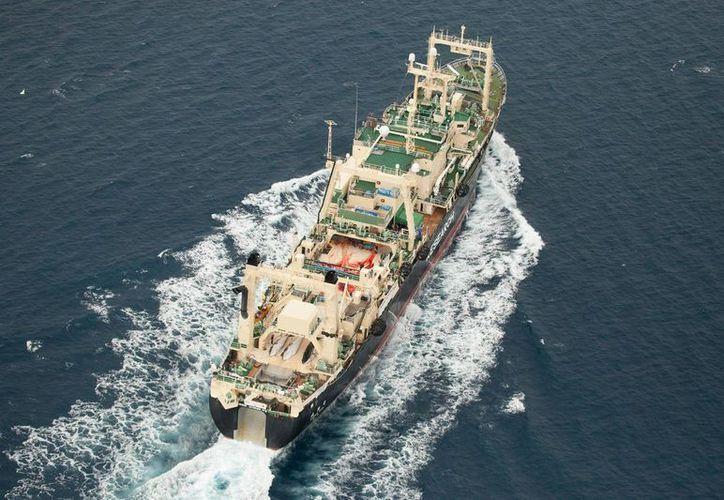Japón ha reducido drásticamente la caza de ballenas debido a la baja en la demanda de la carne. (AP)