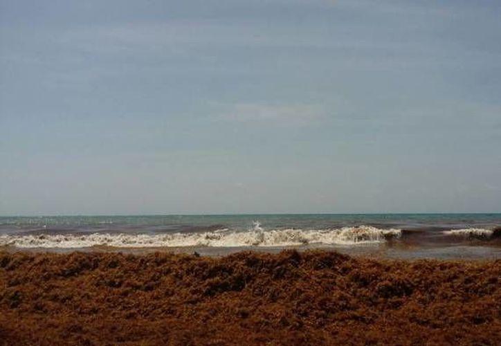 "Desde temprano se reforzaron las actividades de remozamiento de ""Playa Gaviota Azul"". (Contexto/ SIPSE)"
