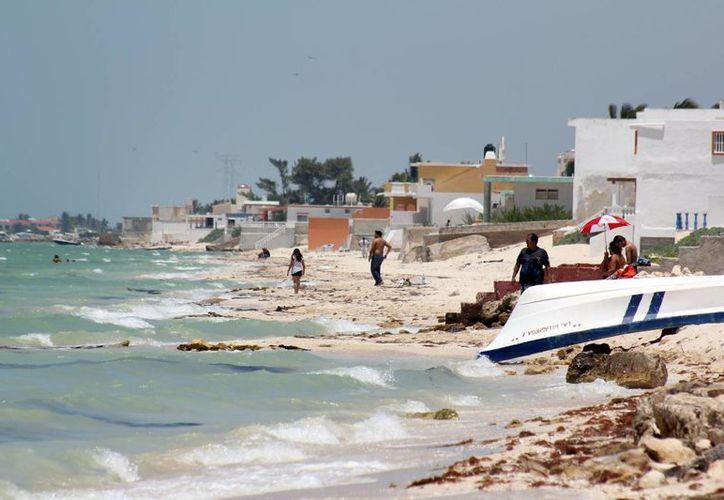 Hasta el momento se descarta la presencia de marea roja en Yucatán. (SIPSE)