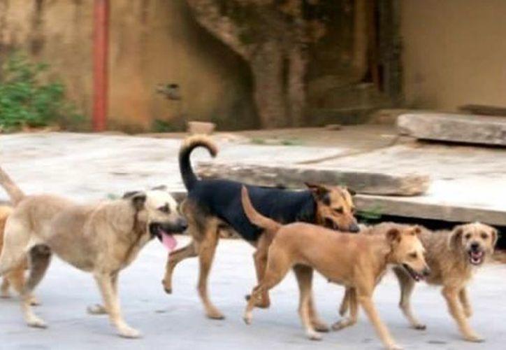 Las víctimas de las mordeduras de perros en el Cerro de la Estrella tenían lesiones en brazos y piernas. (Foto de contexto)