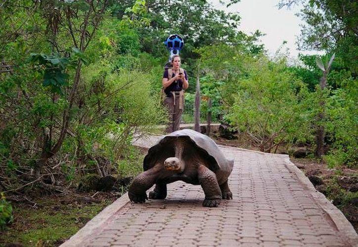 Las emblemáticas tortugas de las Islas Galápagos estarán al alcance con un solo click. (googleblog.blogspot.com)