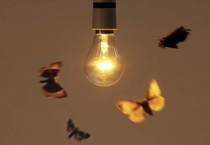 Aún hoy no existe una explicación concreta sobre por qué los insectos se ven irremediablemente atraídos por las luces brillantes. (Contexto/Internet)