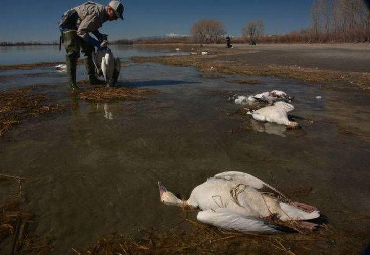 Miles de aves que se acercan a un depósito de aguas tóxicas están siendo ahuyentadas con reflectores y ruidos para evitar que sigan muriendo. (townnews.com)