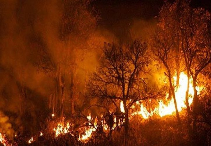 El incendio, que inició el fin de semana pasado, ha consumido más de 16 mil hectáreas al sur de Arizona. (diariodequeretaro.com.mx)