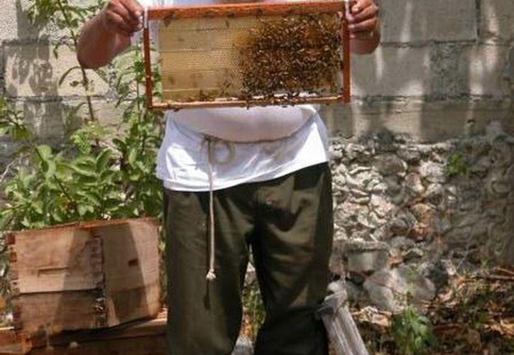 Los apicultores se están dando a la tarea de revisar minuciosamente sus colmenas. (Manuel Salazar/SIPSE)