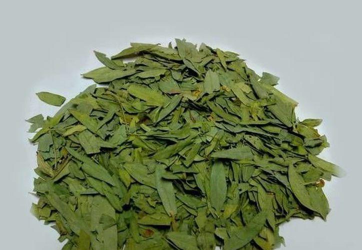 La Hoja de Sen contiene gran cantidad de sustancias que la hacen un excelente laxante y diurético. (hierbassuquia.com.ar)
