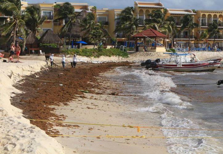 Tratarán que el sargazo no llegue a la playa en Solidaridad. (Adrián Barreto/SIPSE)