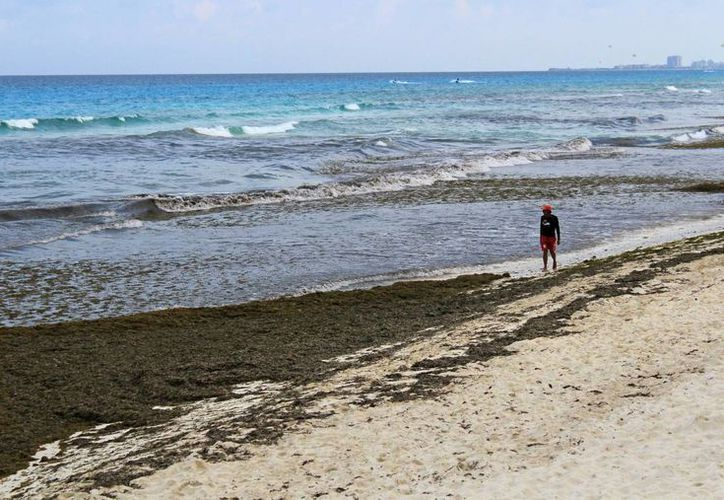 En estos dos días ha bajado la llegada de bañistas a esa playa ante la imposibilidad de adentrarse en el mar. (Jesús Tijerina/SIPSE)