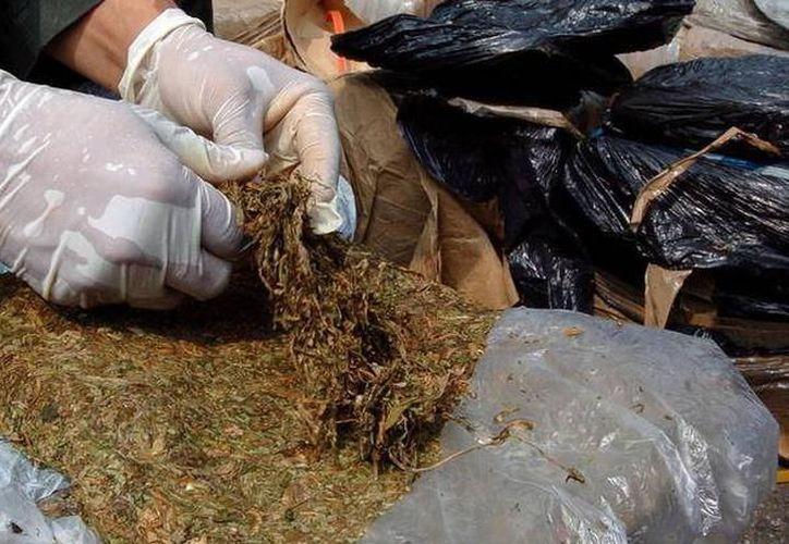 En 2016 se decomisaron 74.29 kilogramos de marihuana, dos mil 500 kilogramos de hachís, 91 capsulas, dos armas y cinco pastillas psicotrópicas. (SIPSE)