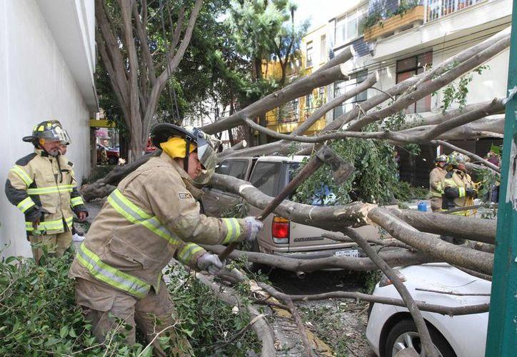 Bomberos retiran un árbol que cayó sobre tres automóviles en la colonia Del Valle de la Ciudad de México, a causa de los ventarrones que afectaron a la Ciudad de México y zona conurbada. (NOTIMEX/Gustavo Durán)
