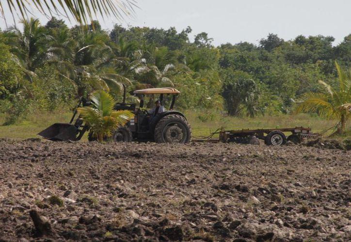 Bomba de aspersión, fertilizantes, herbicidas e insecticidas, recibió cada productor, principalmente los que se dedican a granos básicos. (Harold Alcocer/SIPSE)