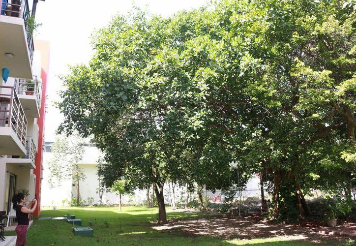 En promedio, según la ONU, es que haya 12 metros cuadrados de áreas verdes por habitante. (Adrián Barreto/SIPSE)