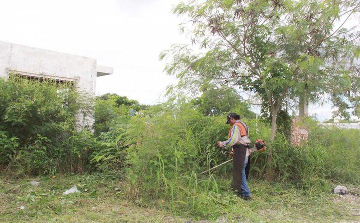 En poco más de seis meses, de abril a la fecha, 840 predios baldíos en Mérida fueron limpiados por sus propietarios. La Comuna ya multó por 1.5 millones de pesos, en ese mismo período, a dueños de 26 inmuebles. (Foto cortesía)