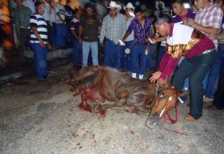 En los torneos de lazo se infringe sufrimiento tanto al toro como a los caballos. Estos últimos resultan los más afectados. (animanaturalis.org)