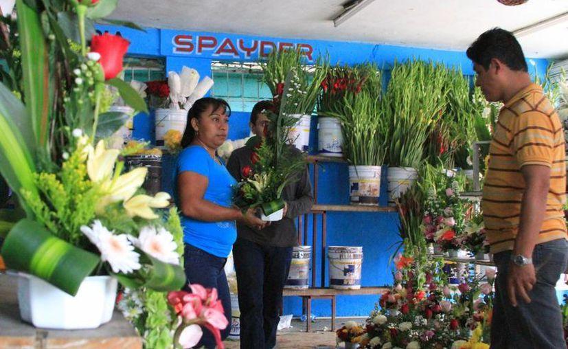Las bajas temperaturas han propiciado un aumento en las flores, particularmente en las rosas. (Ángel Castilla/SIPSE)