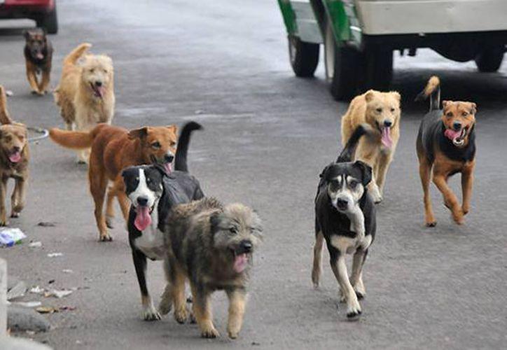 Autoridades sanitarias de Comalcalco, Tabasco, condicionan la liberación del servicio social a estudiantes de medicina, a la entrega de cabezas de perros. (Internet)