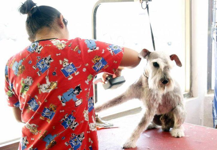 Imagen de una estética canina, como la que ladrones robaron en el centro de Mérida. (Archivo/SIPSE)
