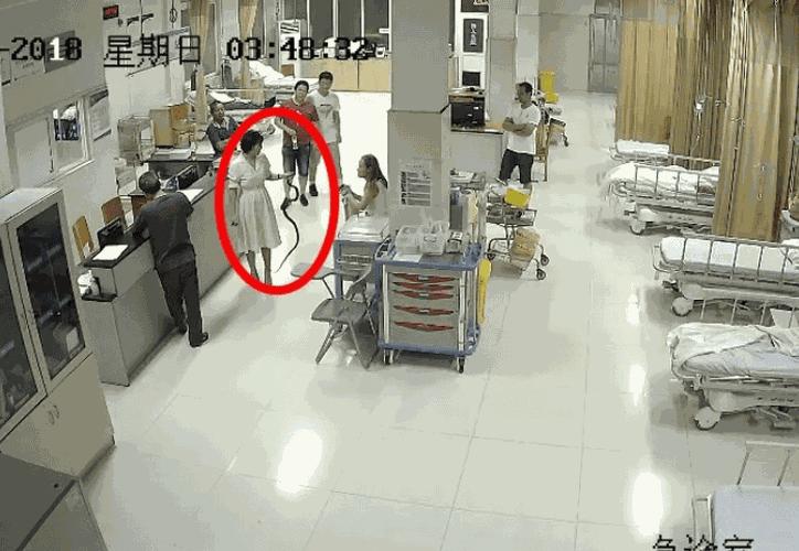 Para recibir el tratamiento adecuado, la mujer llevó a la serpiente que la mordió al hospital. (Foto: Universidad Zhejiang de Pujiang)